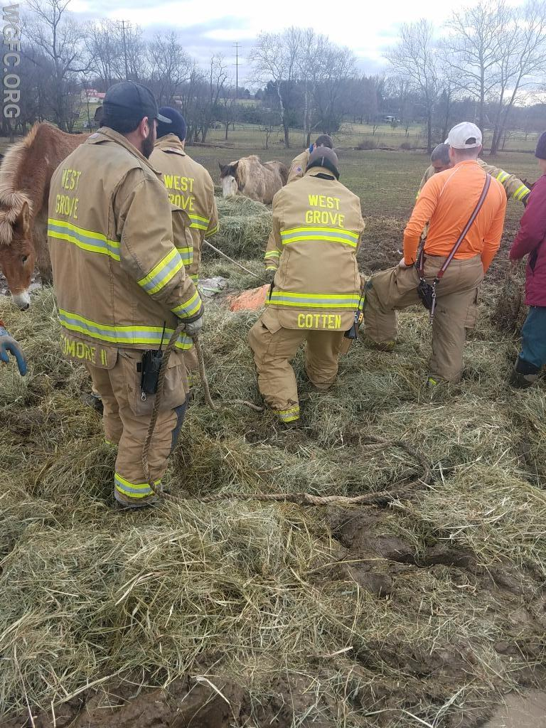 Crews work to free the horse.