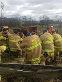 WGFC crews pull a horse trapped in mud from the field as the rescue operation is underway.